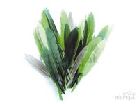 Aranžérske pierka 10g - zelené odtiene